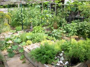 http://herbgardens.about.com/u/sty/herbalgardendesign/Show-us-your-herb-gardens/Robert-Esparza-s-Herb-Garden.htm